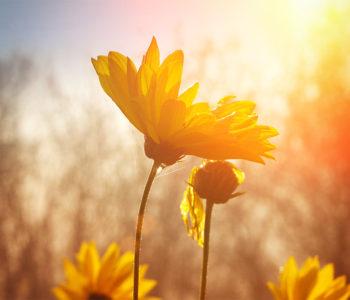 flower under the sun